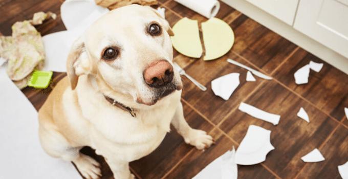 7 symptoms of behavioral disorders in dogs