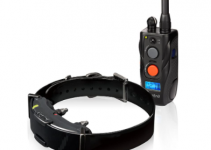 The Dogtra ARC training collar, Best Shock Collars For Hunting Dogs