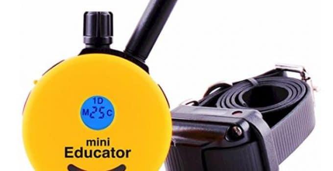Educator E-Collar Remote Dog Training Collar, Best Shock Collar For hunting dogs